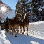 Pferdeschlittenfahrt im Pitztal
